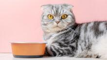 Mars перезапускает бренд кормов для кошек