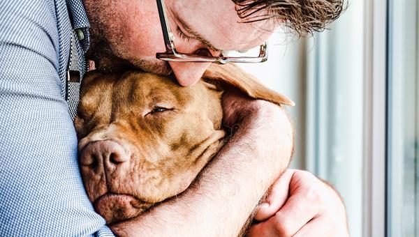 В Австралии началась кампания «Аренда с домашними животными»