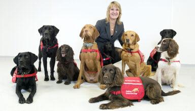 Purina и Medical Detection Dogs научат собак выявлять больных COVID-19