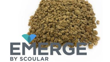 Scoular представил новый источник белка из ячменя - Emerge
