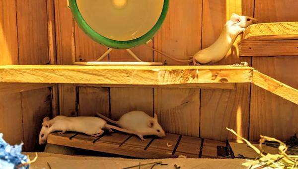 Создатель корма из клонированного мяса получил новые инвестиции