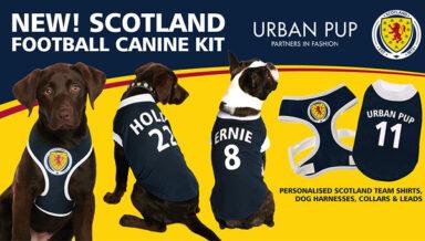Собаки шотландских футбольных фанатов оденуться в командном стиле