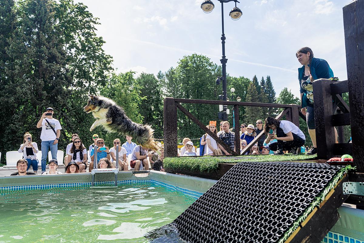 Прыжки в воду с разбега - конкурс для собак на фестивале Petshop days