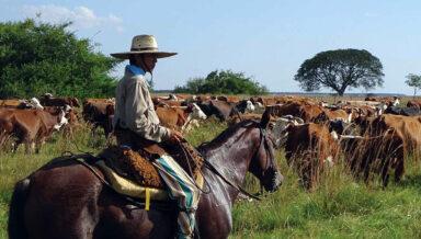 Временный запрет на экспорт аргентинской говядины