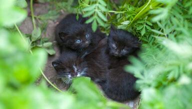 Летом британские приюты переполнены брошенными котятами
