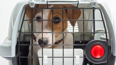 США временно запретили ввоз собак из России