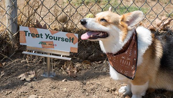 Компания Jinx сделала рекламу для собак