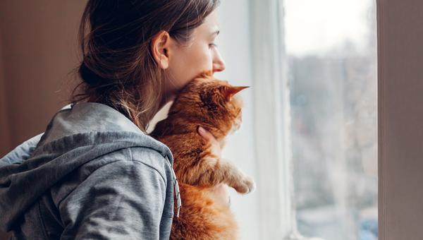 PetSmart выделил $260 тыс. на помощь жертвам домашнего насилия