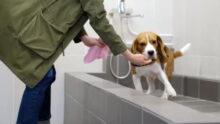 Застройщики не торопятся создавать pet-friendly жилые комплексы