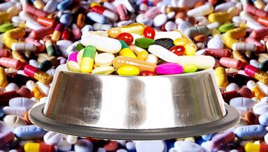 В третьем чтении Госдума приняла закон о вводе в оборот ветеринарных препаратов