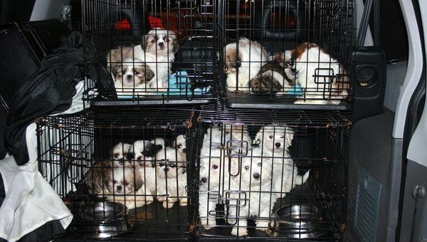 РСН: незаконная торговля животными может привести к «закрытию» Евросоюза
