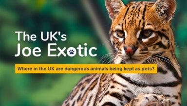 Более 200 опасных животных живут в Великобритании в качестве любимцев