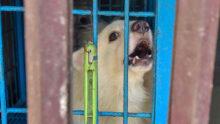 Из-за локдауна в Бангладеш гибнут животные в зоомагазинах