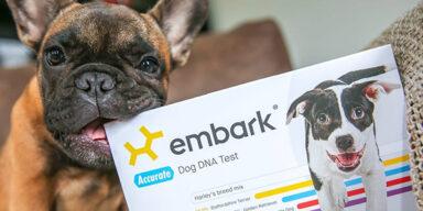 Создатель ДНК-тестов для собак Embark получил $75 млн инвестиций