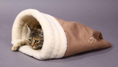 «Зооконтинент» обновил домики для кошек