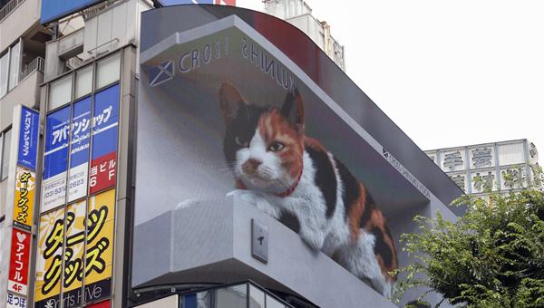 В Токио на гигантском экране показывают трёхцветную кошку