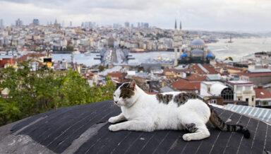 Закон о животных обсуждается в парламенте Турции