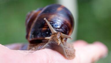 «Зоомир» представил лакомства для моллюсков и корм для рыб