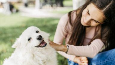 Royal Canin запускает собственный благотворительный фонд