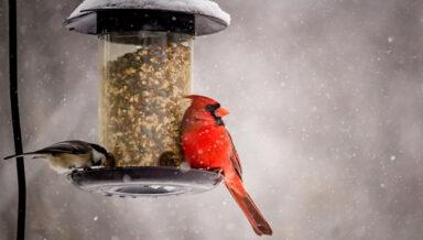 Central Garden & Pet поглощает производителя кормов для птиц и других животных D&D