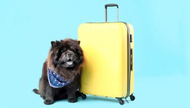Компания «Аэрофлот» начала начислять мили за перевозку животных