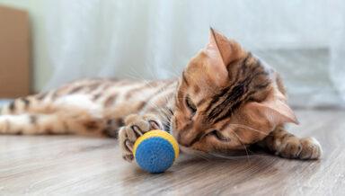 Зоомонитор: во Владивостоке вырос интерес к игрушкам для кошек