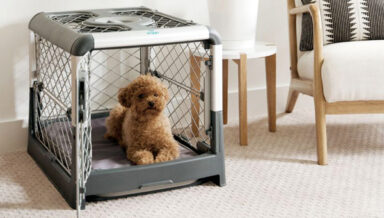 Производитель клеток для собак получил крупные инвестиции