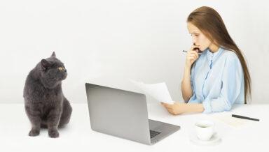 Россиян интересует страховка на собак и кошек