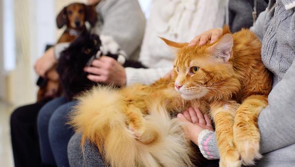 Россияне стали чаще посещать ветеринарного врача