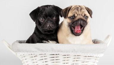 В Австралии наблюдается рост мошенничества при продаже животных
