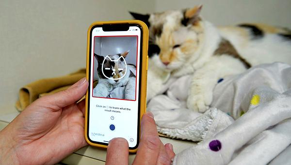 В Канаде разработали приложение, которое «видит» боль на фотографиях кошек