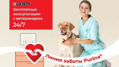 Purina запустила онлайн-консультации с ветврачами для владельцев животных