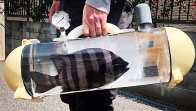В Японии разработали переноску для живой рыбы Katsugyo