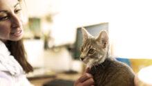 Purina провела новое исследование pet friendly политики