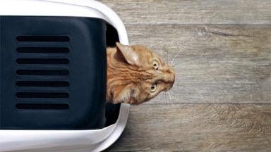 Жара «подогрела» спрос на наполнители для кошачьего туалета