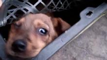 В Китае маленькие щенки и котята стали жертвой моды на «слепые коробки»
