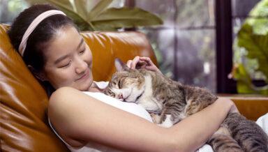 В Тайване продолжается рост рынка зоотоваров