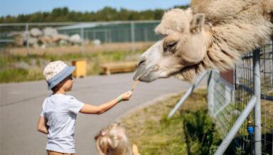 Россельхознадзор: цирки и зоопарки не торопятся получать лицензии