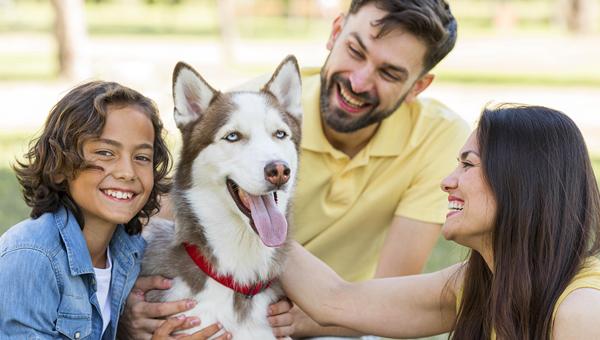26 августа отмечается Международный день собак