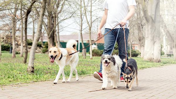 «Бетховен» и Royal Canin снова запустили сервис по выгулу собак