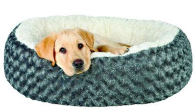 Готовь сани летом, а лежаки для собак – всегда