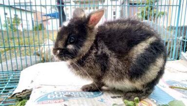 В индонезийском зоомагазине обнаружили самого редкого кролика в мире