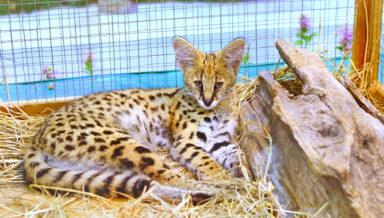 Словакия планирует обуздать нелегальное разведение экзотических животных
