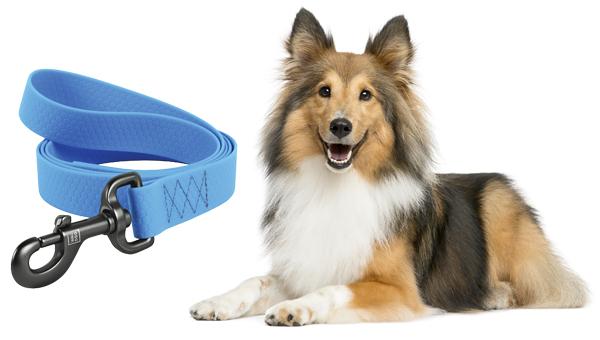 COLLAR представил поводки для собак новой длины