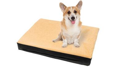 Компания Xody разработала ортопедические лежанки для собак и кошек