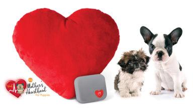 В США разработали «сердечные» игрушки для животных