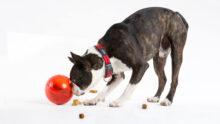 Производитель игрушек для собак ROGZ открывает дистрибьюторский центр в Великобритании