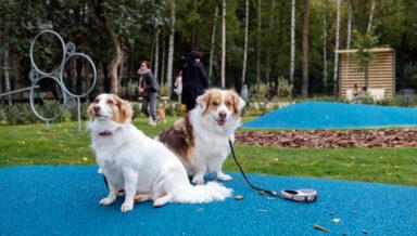 В Москве начали принимать гостей новые площадки для выгула собак