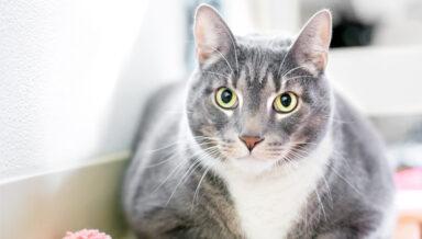 На Винзаводе пройдёт выставка-пристройство для людей с аллергией на кошек