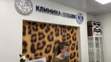 В Москве появилась ветклиника только для кошек